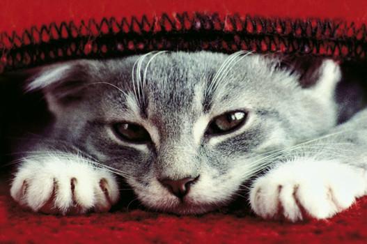 Magnete für Katzenliebhaber: Display