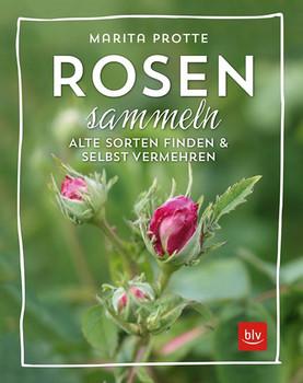 Rosen sammeln. Alte Rosen finden & vermehren - Marita Protte  [Gebundene Ausgabe]